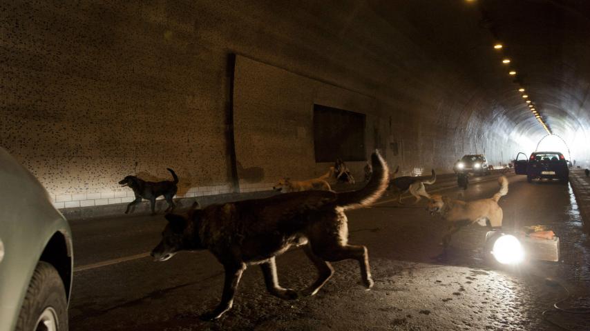 "Szene aus ""Underdog"" © Delphi Filmverleih"